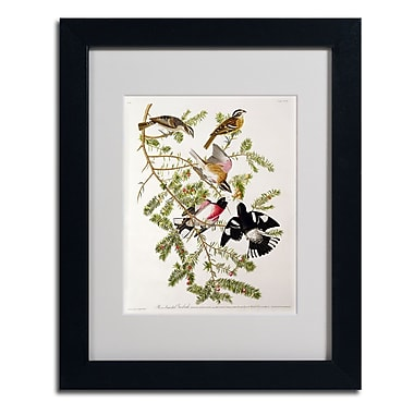 Trademark Fine Art 'Rose-Breasted Grosbeak'