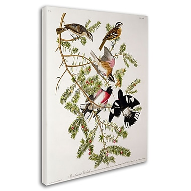 Trademark Fine Art 'Rose-Breasted Grosbeak' 26