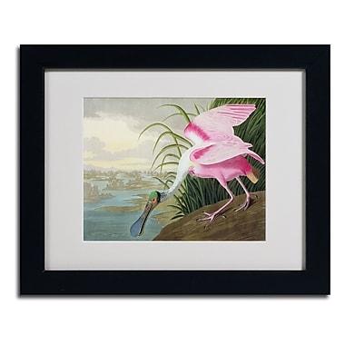 Trademark Fine Art 'Roseate Spoonbill'