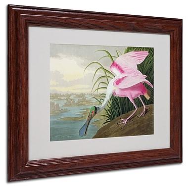 Trademark Fine Art 'Roseate Spoonbill' 11