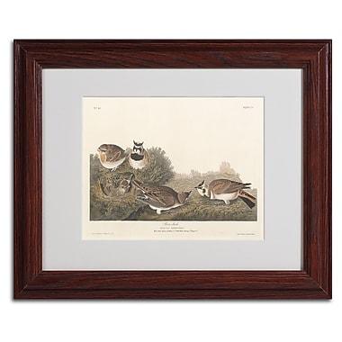Trademark Fine Art 'Shore Lark' 11