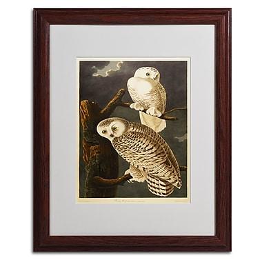 Trademark Fine Art 'Snowy Owl' 16