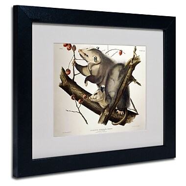 Trademark Fine Art 'Virginian Opossum' 11