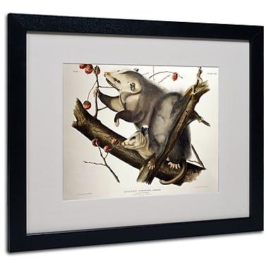 Trademark Fine Art 'Virginian Opossum' 16