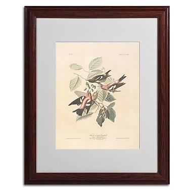Trademark Fine Art 'White-Winged Crossbill' 16