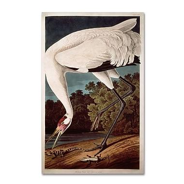 Trademark Fine Art 'Whooping Crane' 14