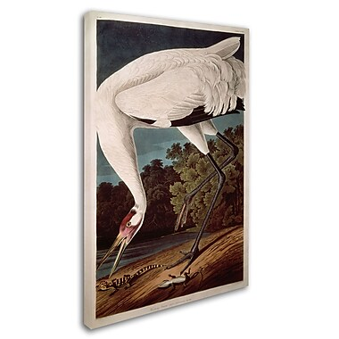 Trademark Fine Art 'Whooping Crane' 16