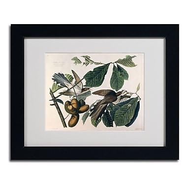 Trademark Fine Art 'Yellow-Billed Cuckoo'