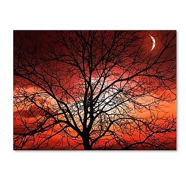 Trademark Fine Art 'Big Bad Moon' 16