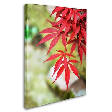 Trademark Fine Art 'Japanese Maple' 30