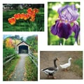 S&S® 17in. X 11in. Thera Jigsaw Foam Puzzles Set B, Bridge/Geese/Iris/Tulips