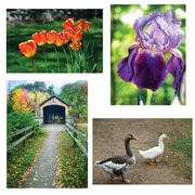 "S&S® 17"" X 11"" Thera Jigsaw Foam Puzzles Set B, Bridge/Geese/Iris/Tulips"