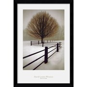 "Amanti Art David Lorenz Winston ""Solitude"" Framed Print Art, 38.62"" x 26.62"""