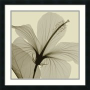 "Amanti Art Steven N. Meyers ""Hibiscus"" Framed Print Art, 24"" x 24"""