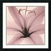 "Amanti Art Steven N. Meyers ""Lily"" Framed Print Art, 24"" x 24"""