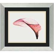 "Amanti Art Steven N. Meyers ""Giant Calla"" Framed Print Art, 12.88"" x 14.88"""