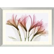 "Amanti Art Steven N. Meyers ""Alstromeria"" Framed Print Art, 21.88"" x 29.88"""