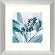 "Amanti Art Steven N. Meyers ""Eucalyptus I"" Framed Print Art, 14.12"" x 14.12"""