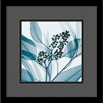 """""Amanti Art Steven N. Meyers """"""""Eucalyptus I"""""""" Framed Print Art, 13 1/4"""""""" x 13 1/4"""""""""""""" 966899"