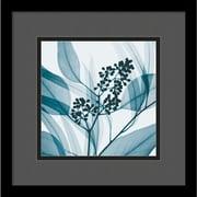 "Amanti Art Steven N. Meyers ""Eucalyptus I"" Framed Print Art, 13 1/4"" x 13 1/4"""