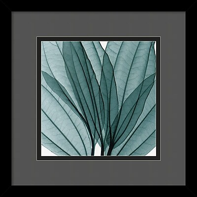 """""Amanti Art Steven N. Meyers """"""""Leaf Bouquet"""""""" Framed Print Art, 13 1/4"""""""" x 13 1/4"""""""""""""" 967023"