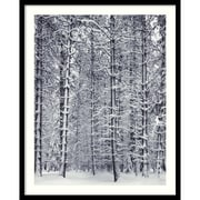 "Amanti Art Ansel Adams ""Pine Forest in the Snow, Yosemite National Park"" Framed Print Art, 31"" x 25"""