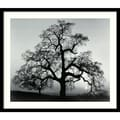Amanti Art Ansel Adams in.Oak Tree, Sunset City, California, 1962in. Framed Print Art, 23in. x 27in.