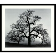 "Amanti Art Ansel Adams ""Oak Tree, Sunset City, California, 1962"" Framed Print Art, 23"" x 27"""
