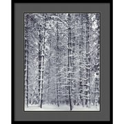"""Amanti Art Ansel Adams """"Pine Forest in the Snow, Yosemite National Park"""" Framed Print Art, 33"""" x 27"""""""