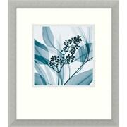 "Amanti Art Steven N. Meyers ""Eucalyptus I"" Framed Print Art, 16 3/4"" x 14 3/4"""