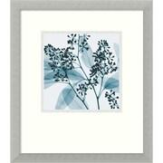 "Amanti Art Steven N. Meyers ""Eucalyptus II"" Framed Print Art, 16 3/4"" x 14 3/4"""