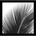 Amanti Art Jamie Kingham in.Palms 14 (Detail)in. Framed Print Art, 12.75in. x 12.88in.