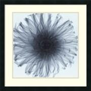 "Amanti Art Steven N. Meyers ""Dahlia"" Framed Print Art, 25"" x 25"""
