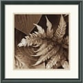 Amanti Art Rebecca Swanson in.Painted Ferns IIin. Framed Print Art, 17 1/2in. x 17 1/2in.