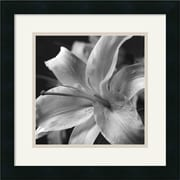 "Amanti Art Gaetano Art Group ""Pure Lily"" Framed Print Art, 15.88"" x 15.88"""
