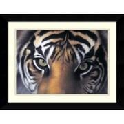 "Amanti Art Alexander ""Eyes of the Goddess: Sumatran Tigress"" Framed Animal Art, 20.62"" x 26.62"""