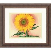 Amanti Art Georgia O'Keeffe A Sunflower from Maggie, 1937 Framed Print Art, 14.12 x 16.25