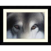 "Amanti Art Charles Alexander ""Eyes of the Hunter: Gray Wolf"" Framed Animal Art, 20.62"" x 26.62"""