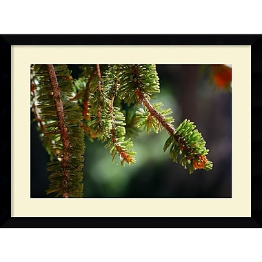 Amanti Art Andy Magee in.Bristlecone Pinein. Framed Print Art, 28.62in. x 38.62in.