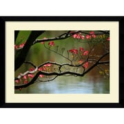 "Amanti Art Andy Magee ""Dogwood in Bloom"" Framed Print Art, 28.62"" x 38.62"""