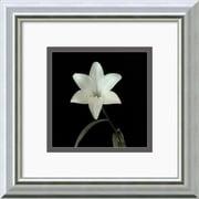 "Amanti Art Walter Gritsik ""Flower Series VI"" Framed Print Art, 12"" x 12"""