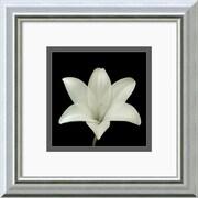 "Amanti Art Walter Gritsik ""Flower Series VII"" Framed Print Art, 12"" x 12"""