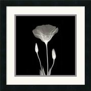 "Amanti Art ""Poppy in Lace"" Framed Print Art, 18"" x 18"""