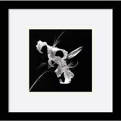 """""Amanti Art Walter Gritsik """"""""Flower Series II"""""""" Framed Print Art, 11"""""""" x 11"""""""""""""" 965623"