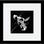 "Amanti Art Walter Gritsik ""Flower Series II"" Framed Print Art, 11"" x 11"""