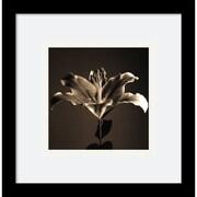 "Amanti Art Walter Gritsik ""Flower Series IV"" Framed Print Art, 11"" x 11"""