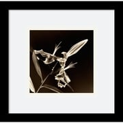 """Amanti Art Walter Gritsik """"Flower Series V"""" Framed Print Art, 11"""" x 11"""""""
