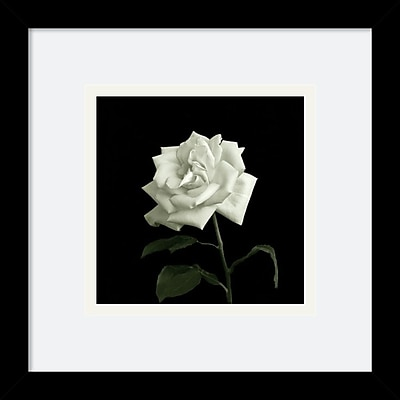 """""Amanti Art Walter Gritsik """"""""Rose, Flower Series VIII"""""""" Framed Print Art, 11"""""""" x 11"""""""""""""" 965616"