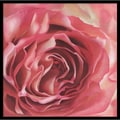 Amanti Art Leni Bates in.The Rose's Petalsin. Framed Print Art, 30 3/4in. x 30 3/4in.