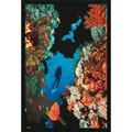 Amanti Art  in.Coral Reefin. Framed Animal Art, 37.38in. x 25.38in.